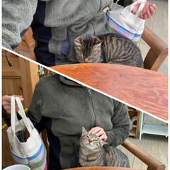 ふくろう箸置き𓅓/雑貨屋さん/シクラメン/スキミア/お花屋さん/猫カフェではない/... 猫カフェ?!☆  猫カフェではありません…