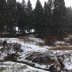 実家/景色/雪 本格的に雪☆  やっと本格的な雪になりま…