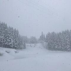 景色/寒波/大雪/冬/実家/雪/... 大雪です☆  天気予報通り… 雪が降って…