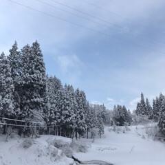 雪景色/実家/真冬/春/風景/春の一枚 春♪だけど➰冬…☆  玄関が真っ黄っきに…