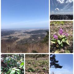 澄んだ空気/春の花/空/春の山/登山/山/... 春の山☆  お天気もよく♪ 春山登山をし…
