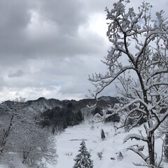 やみ間/冬/散歩/景色/実家/雪/... 雪のやみ間に散歩☆  お昼頃だけ雪もやみ…