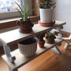 可愛い/ペロリ/美味しい/濃厚/パスタ/数量限定/... 手作り棚に植物を☆  先日手作りした棚に…(1枚目)