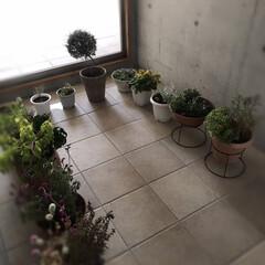 やっとこ/芯まで冷える/寒い/車庫/冬支度/植物 やっとこ冬支度☆  植物をやっと車庫の中…