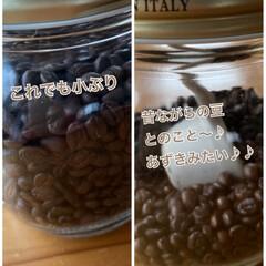 スッキリと苦味が後引く美味しさ/あずきみたいな大きさ/ブラジルの珍しいコーヒー豆/暮らし ブラジルの珍しいコーヒー豆☆  行きつけ…