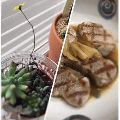 にんにく/初めて/カインズ/魚焼きフライパン/kaldi/ソース/... 黄色いお花が咲きました☆  手に入れたば…