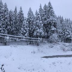 寒い/実家/景色/雪/風景 ついに真っ白☆  今朝はついに銀世界! …