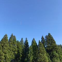 実家/雨がほしい…/明日も晴れ/クッキリ/はっきり/飛行機/... 青空〰︎〰︎✈︎☆  青空に飛行機が♪ …