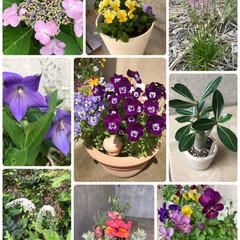 しばらく苦しかった。。。/美味しくて食べ過ぎ…/里芋みそ汁をどんぶりで/寄せ植え/庭の花/野の花/... 今年の植物&昨日のお汁☆  今年の植物を…