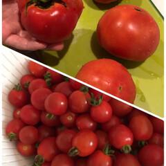 ライトアップ/シラカバツリー/昨日/いただいた/美味しく/朝から/... トマトスープ☆  たくさんトマトをいただ…(2枚目)