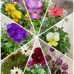 数は少ない/癒される/華やか❁⃘*.゚/ドアップ祭り/今日のお花/寄せ植え/... 今日のお花☆  お花もドアップ祭り〰︎♪…