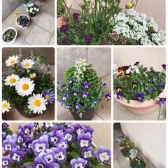 食器/100円じゃない/暖かい/盛りもり/ナチュラル/お椀/... 春のお花☆  暖かくなり➰玄関のお花たち…