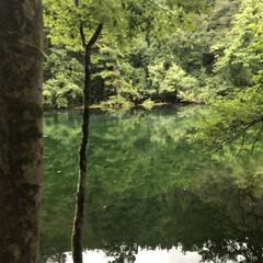 緑/池/竜ヶ窪/名水/おでかけ 名水の池☆  緑に癒されます。。。