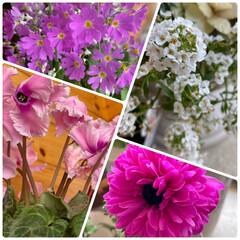 寄せ植え/実家/雪景色/お花たち/今日 今日のお花たちと雪景色☆  今日の実家の…