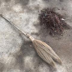 実家/庭/掃除/落ち葉/ほうき/ホウキグサ/... コキアのほうきで落ち葉掃き☆  ハンドメ…
