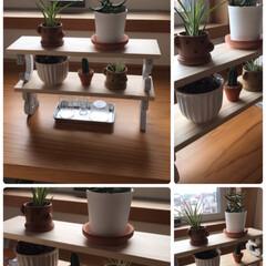 可愛い/ペロリ/美味しい/濃厚/パスタ/数量限定/... 手作り棚に植物を☆  先日手作りした棚に…(2枚目)