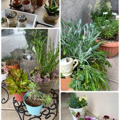 今日の植物/住まい/暮らし/冬支度/ミックスベリーのせアイス/404フォト 今日の植物☆  明日から本格的に寒くなる…