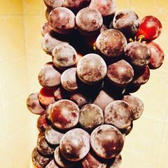 葡萄/果物🍇/デザート/グルメ/フード