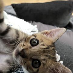 保護猫/子猫/リメイク/しまむら/100均/模様替え/... 【夏のソファー周り】 ソファーで一緒にゴ…(2枚目)