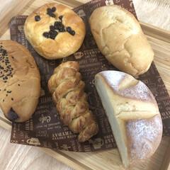 ちわわ大好き/チワワ部/ロンチー/ロングコートチワワ/ちわわ/チワワ/...  нёllо❁︎  パン 🥖🍞🥐🥞届きま…