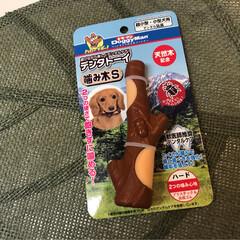 ドギーマン 犬用おもちゃ デンタトーイ噛み木 S サイズ(おもちゃ)を使ったクチコミ「 こんにちは🔆🔅  今日もムシムシ、ジメ…」(2枚目)
