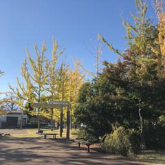 紅葉/公園/秋/風景/おでかけ 先日の公園での散歩の時の一枚です🍁