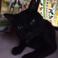 猫 2020年2月29日 2歳 の 黒猫 ク…(2枚目)