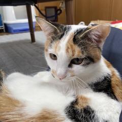 猫好き/三毛猫/トラ猫/黒猫/猫との暮らし おはようございます🎵  毎日、楽しい日々…