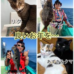 トラ猫/黒猫/三毛猫/猫との暮らし/ねこ/年の瀬/... 今年もあと1日になりましたね。 みなさん…