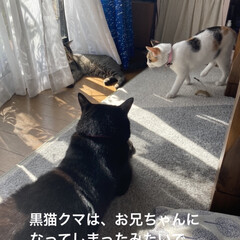 猫との暮らし/トラ猫 今年の5月に里親に出した  トラ猫のリク…(4枚目)