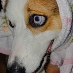 ペット/犬 (1枚目)