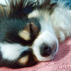 おやすみショット お昼寝太朗くんの寝顔をぱしゃり♡