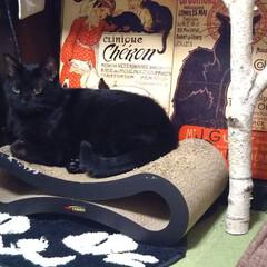 「クロネコに囲まれた黒猫🎵 おすまししてい…」(1枚目)