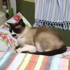 おやすみショット 毛布大好き💕