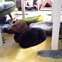 「神無月 ホカぺの上に 集う猫😸  ホット…」(1枚目)