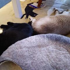 「神無月 ホカぺの上に 集う猫😸  ホット…」(2枚目)