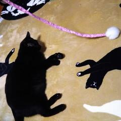 「神無月 ホカぺの上に 集う猫😸  ホット…」(3枚目)