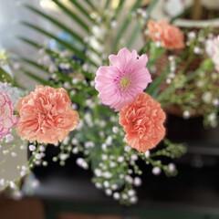 花のある暮らし/ステンレススチール/バラ/ガーベラ/カーネーション/花 バラの、ステンレススチールが咲きました🌹…(3枚目)