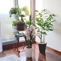 花/観葉植物 再びベッドの中から撮影…… 換気のため窓…