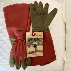 バラ植え替え/バラ用手袋 やっと届きました…… バラを植え替えする…