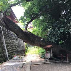 神社 塩竈神社のイボ神様です。 欅の御神木の近…