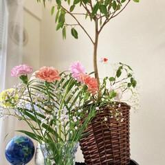 花のある暮らし/ステンレススチール/バラ/ガーベラ/カーネーション/花 バラの、ステンレススチールが咲きました🌹…(2枚目)