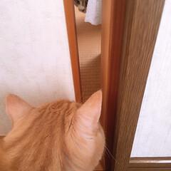 わたしのGW GWに実家へ帰省した際、実家の猫さんと、…(1枚目)