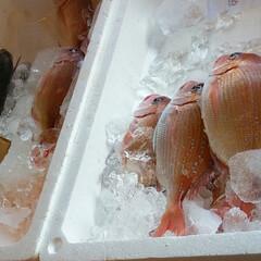 おでかけ/フード/スイーツ 昨日は朝から魚を買いに出掛けました🚙💨 …(2枚目)