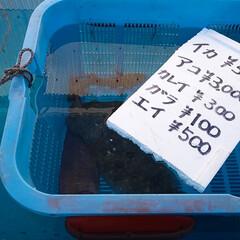 おでかけ/フード/スイーツ 昨日は朝から魚を買いに出掛けました🚙💨 …(4枚目)