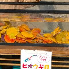 おでかけ/フード/スイーツ 昨日は朝から魚を買いに出掛けました🚙💨 …(1枚目)