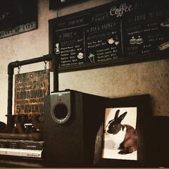 ウサギと暮らす/カフェ風/塩ビパイプDIY/塩ビパイプ/アンティーク/うさぎ/... 昔、飼っていた茶と白の🐇うさぎさん☺️ …