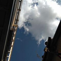 風景/空 朝から見上げた。 青い空。 白い雲。 良…
