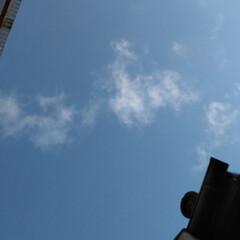 空/冬/風景 見上げた空 9︰29 このあとは曇り。