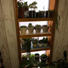 ペイント/デコパージュ/多肉植物/DIY/ハンドメイド/雑貨/... 今日は~♬︎*.:* 今日は朝から雨だっ…(2枚目)